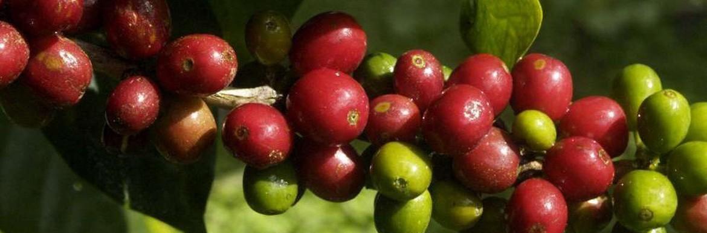Koffiebonen Wereldkoffie